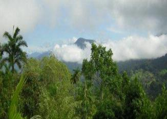 Tropical Mountain setting